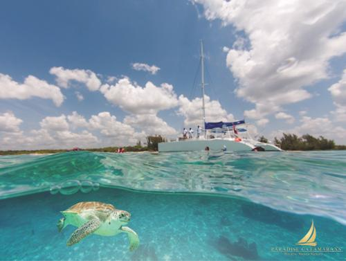 What kind of marine life can you find in Paradise?
